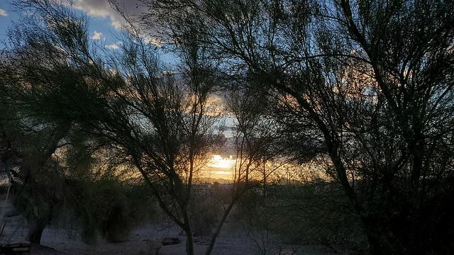 Sunrise Through The Palo Verde