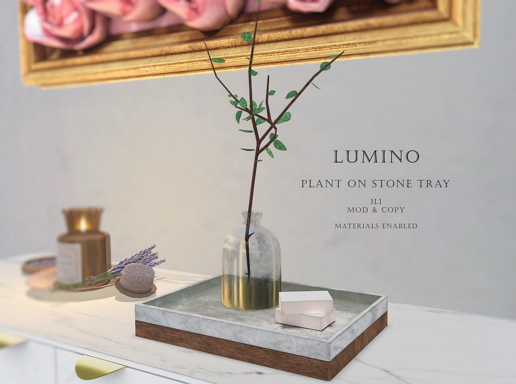 Plant on Stone Tray