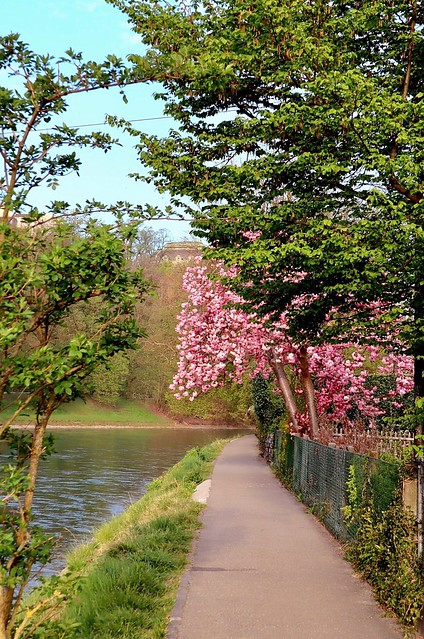 Beautiful spring (EXPLORED)