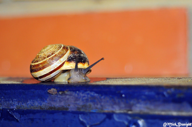 Snail on Blue