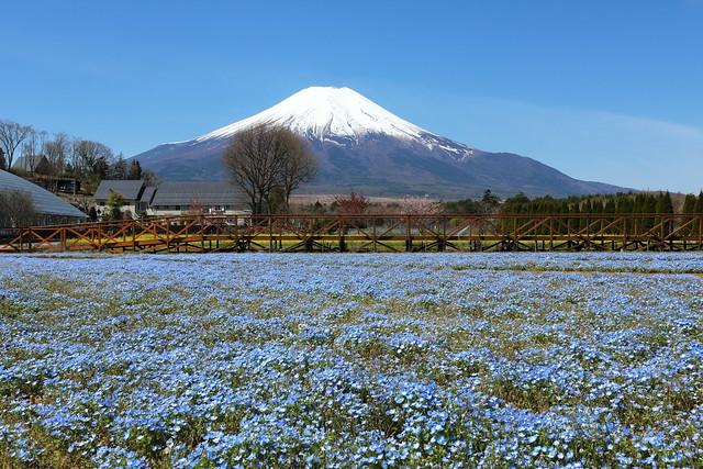 The blue fields