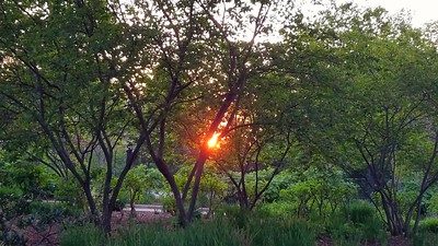 Sunset from the Park