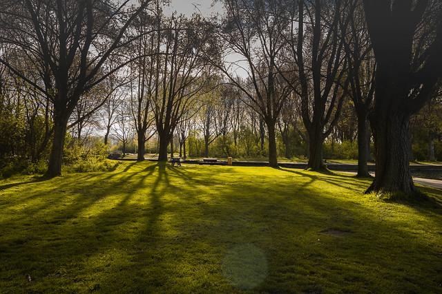 Springtime at the park