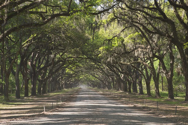 Wormsloe Historic Site. Savannah, Ga
