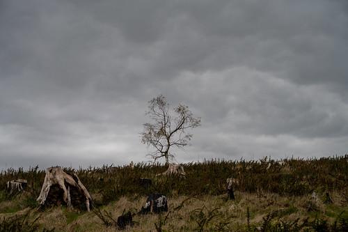 Lonely Tree, Medart