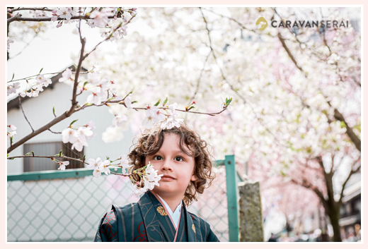 a boy in kimono with cherry blossoms, in spring Japan