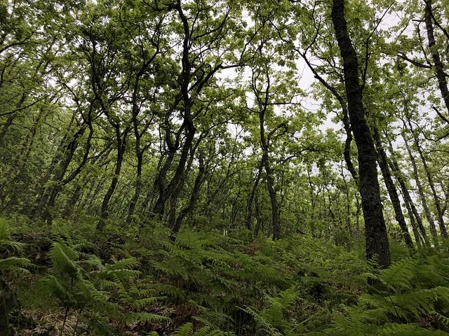 Bosque en la comarca de La Vera