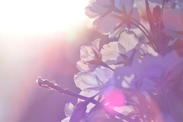 Fantasia in Spring