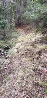 Sur le chemin du Carciara amont (HR22) : entre Frassiccia et les caseddi de la confluence Velacu