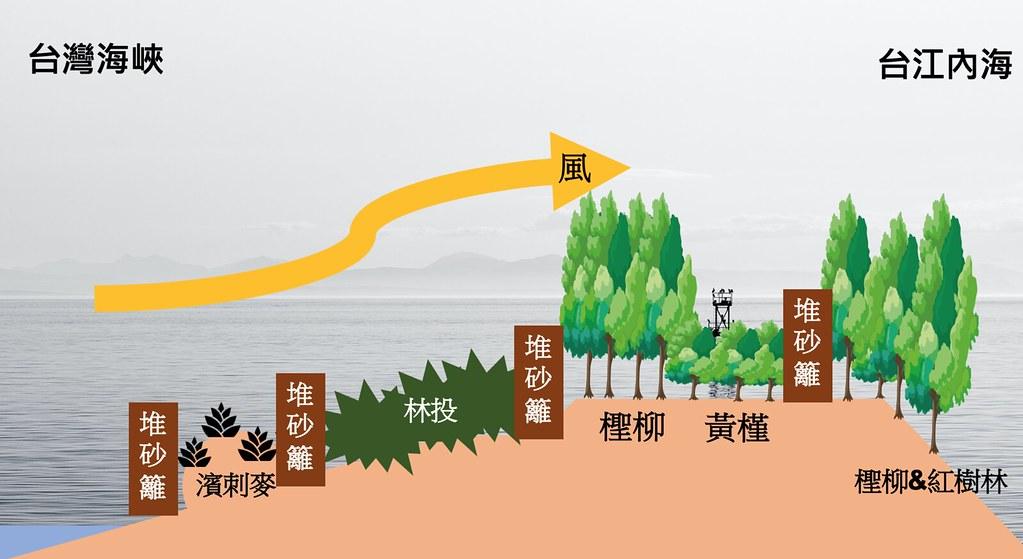 網仔寮沙洲造林樹種安排配置。圖片來源:慈心基金會簡報