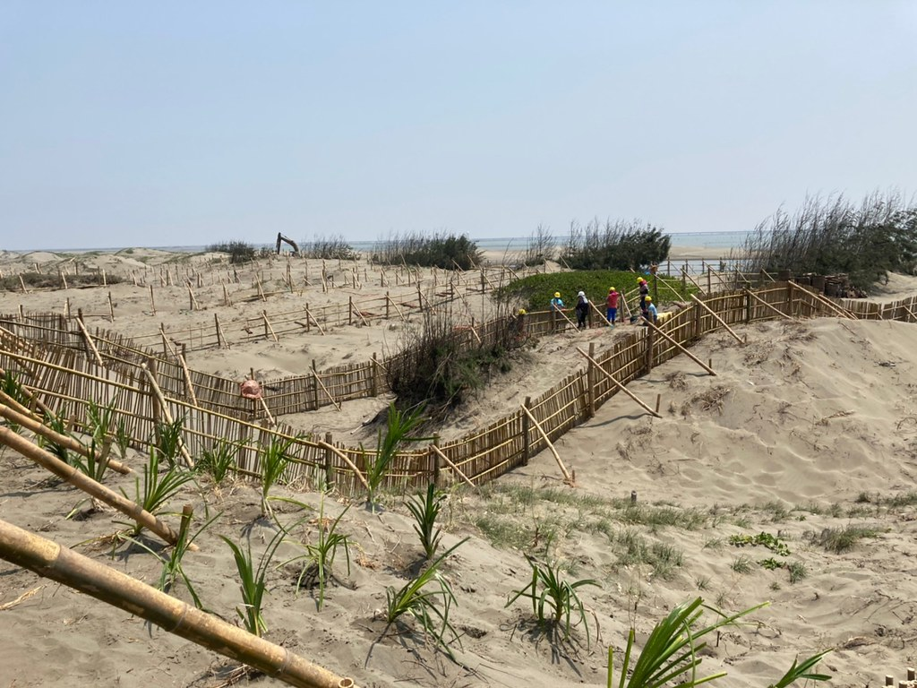 慈心團隊於造林區佈設防風堆沙籬,攔住風砂後植樹以抬升海岸地形。黃思敏攝