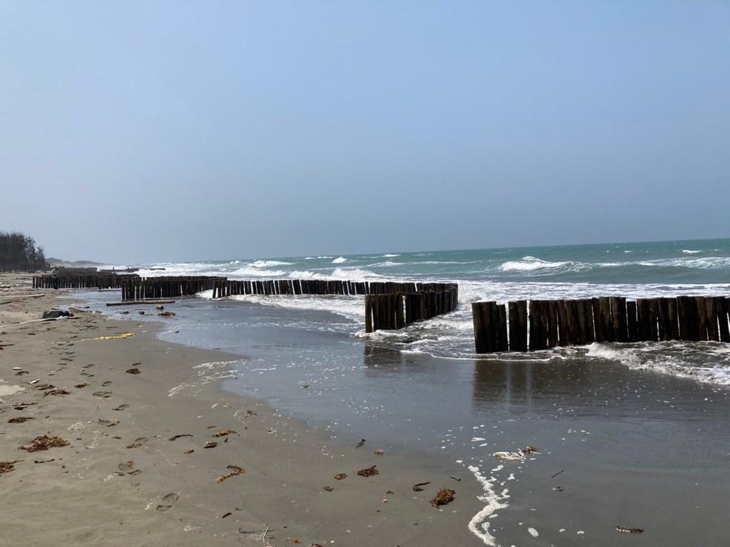 台管處於網仔寮沙洲岸際設置間隔、弧形排列的柳杉木樁作為消浪設施。黃思敏攝