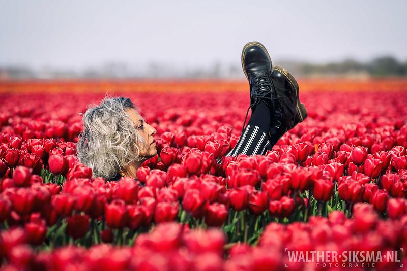 Tulpen shoot met Donika