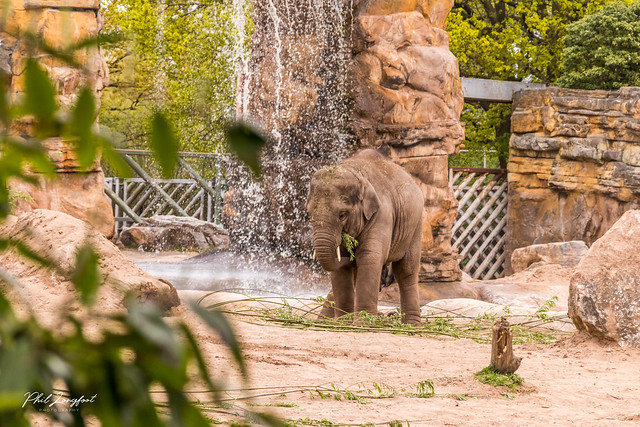 Chester Zoo April 2021