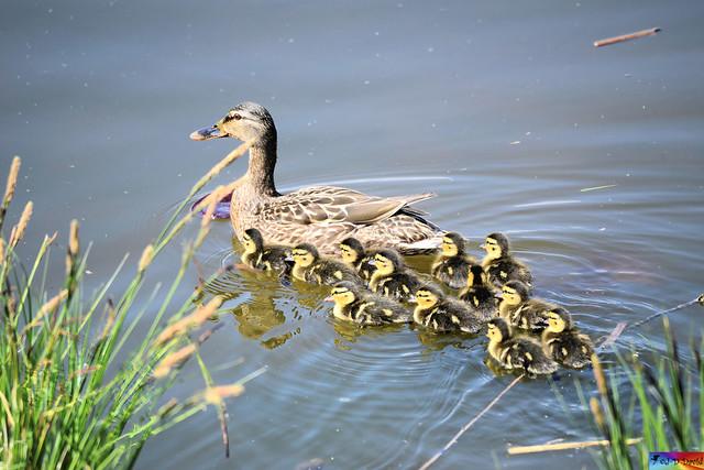 Il faut bien suivre Maman 😍