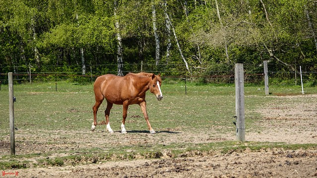 9675 - Horse