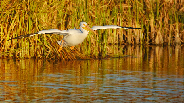 Gliding over the pond