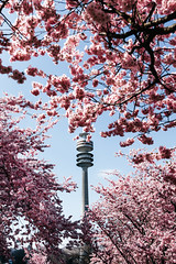 Blossomed Tower