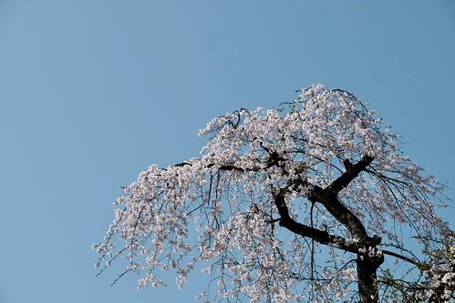 Sakura memories 2021