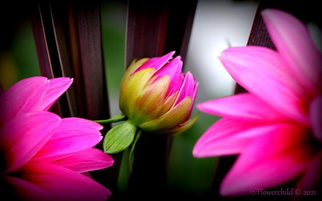 Flower Wannabe