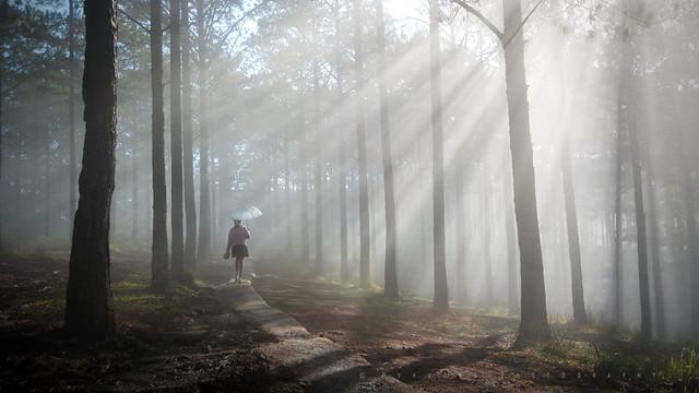 Foggy season - Dalat