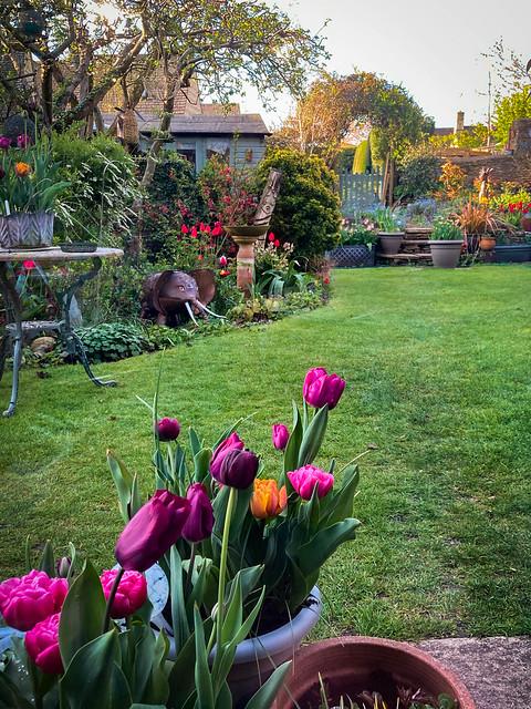 Tulip Time in the Garden #118