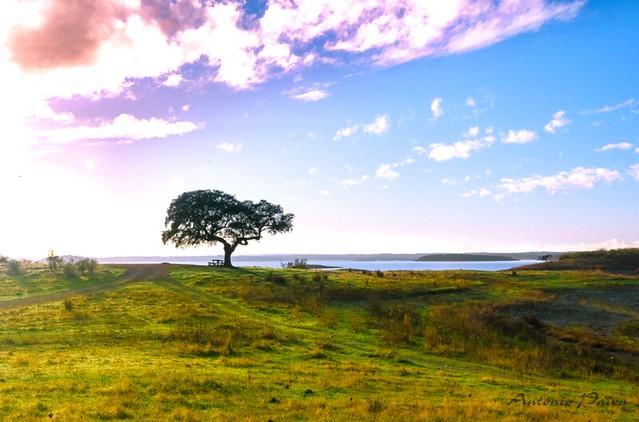 Uma árvore não desiste, resiste! A tree does not give up, it resists! *explore-29.04.2021