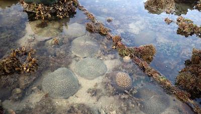 Rope across living reef, Pulau Hantu Apr 2021