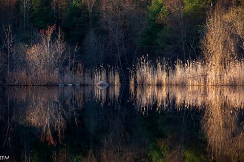 nashoba pond new england nature landscape