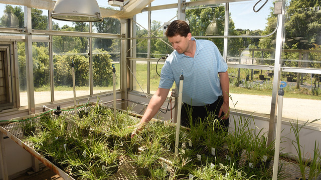 Scott McElroy works in a greenhouse.