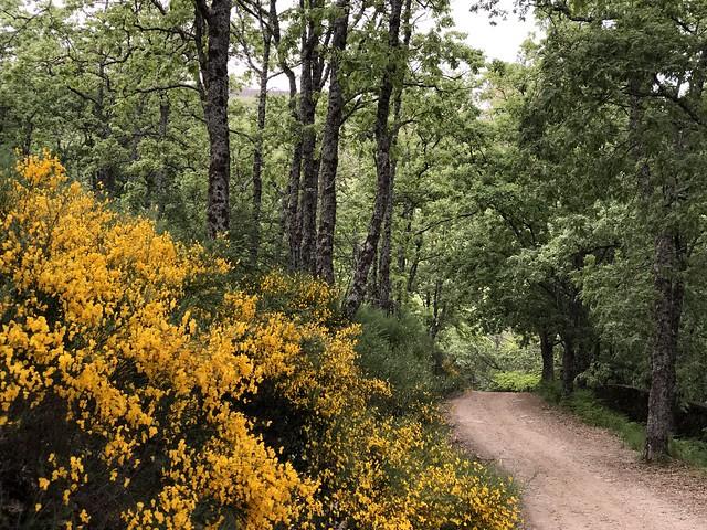 Paraje boscoso en la comarca de La Vera