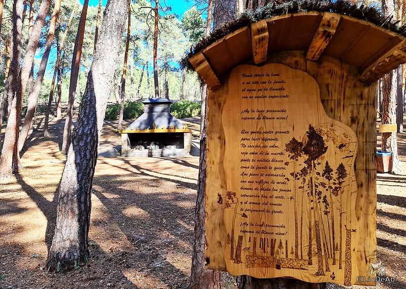 El Bosque Mágico de la Fuente del Pino (35)