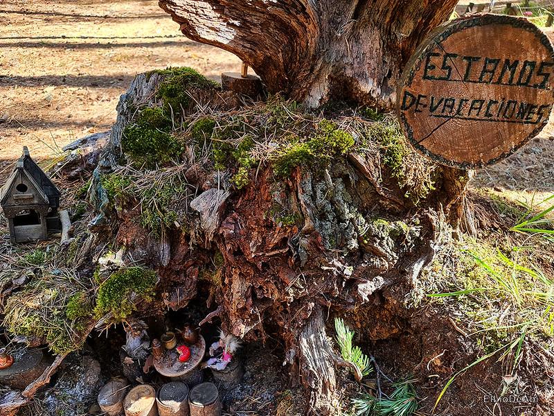 El Bosque Mágico de la Fuente del Pino (29)