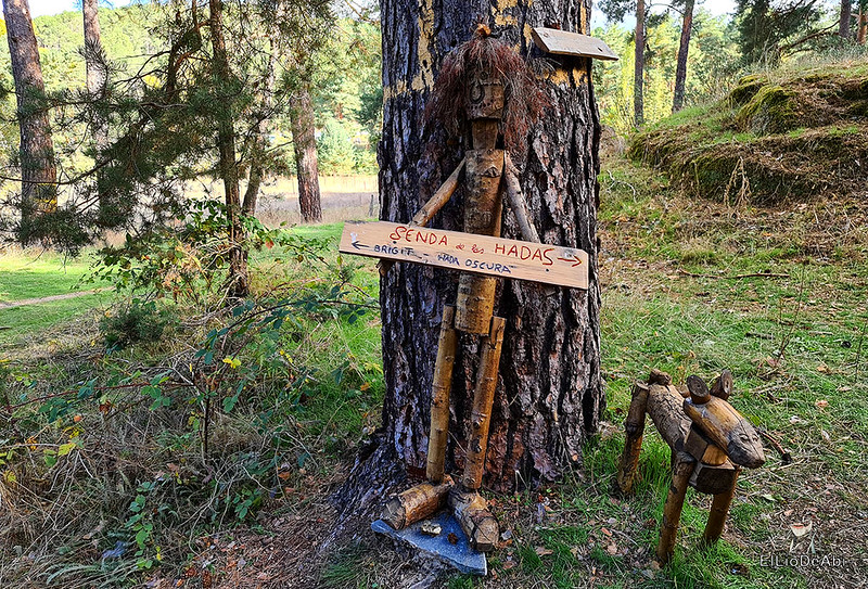 El Bosque Mágico de la Fuente del Pino (7)