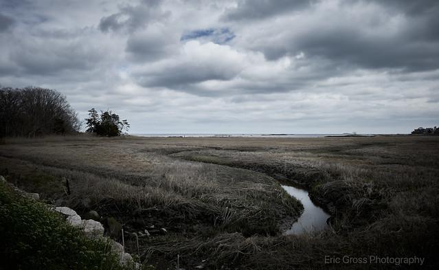 Wetlands at Chaffinch Island