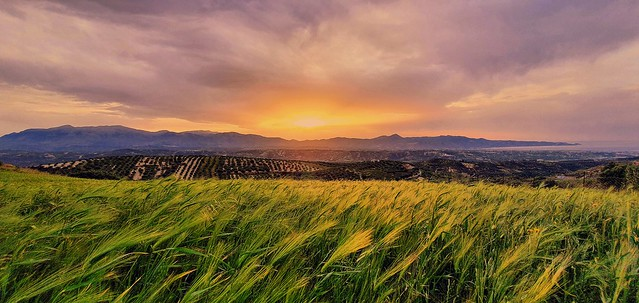 Windy sunset -