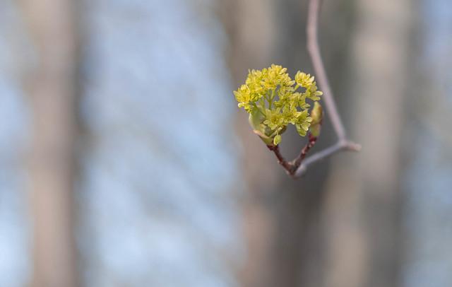 Yellow flourish