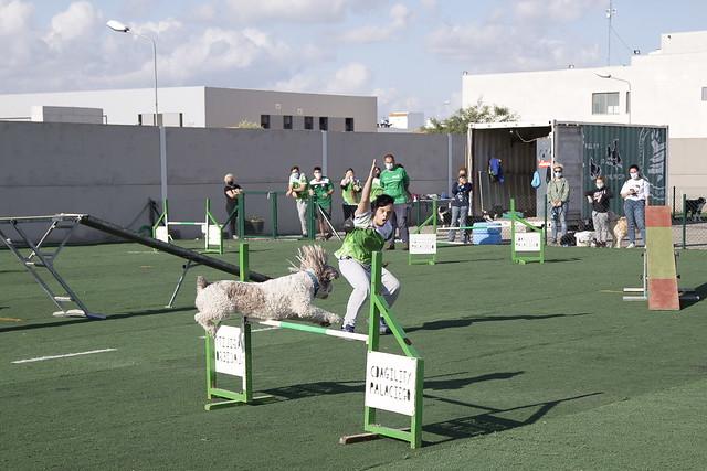 Nuevas pistas de agility en Los Palacios y Vfca