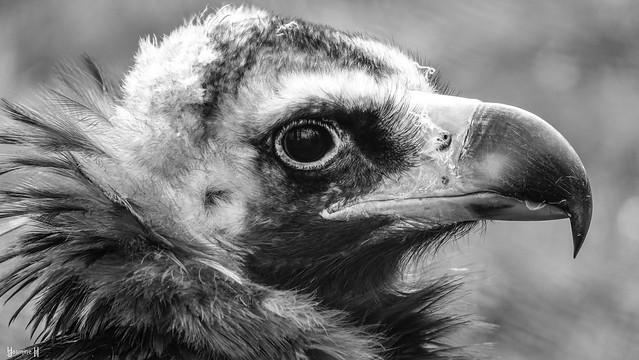 9679 - Portrait Bird