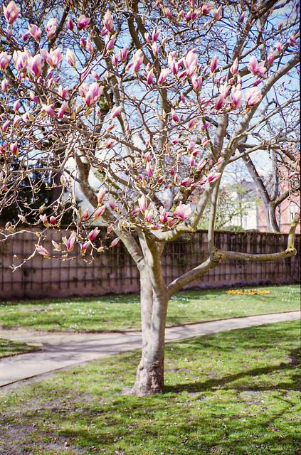 [analog spring '21] tree