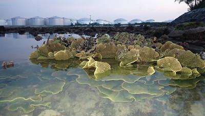 Living reef of Pulau Hantu Apr 2021