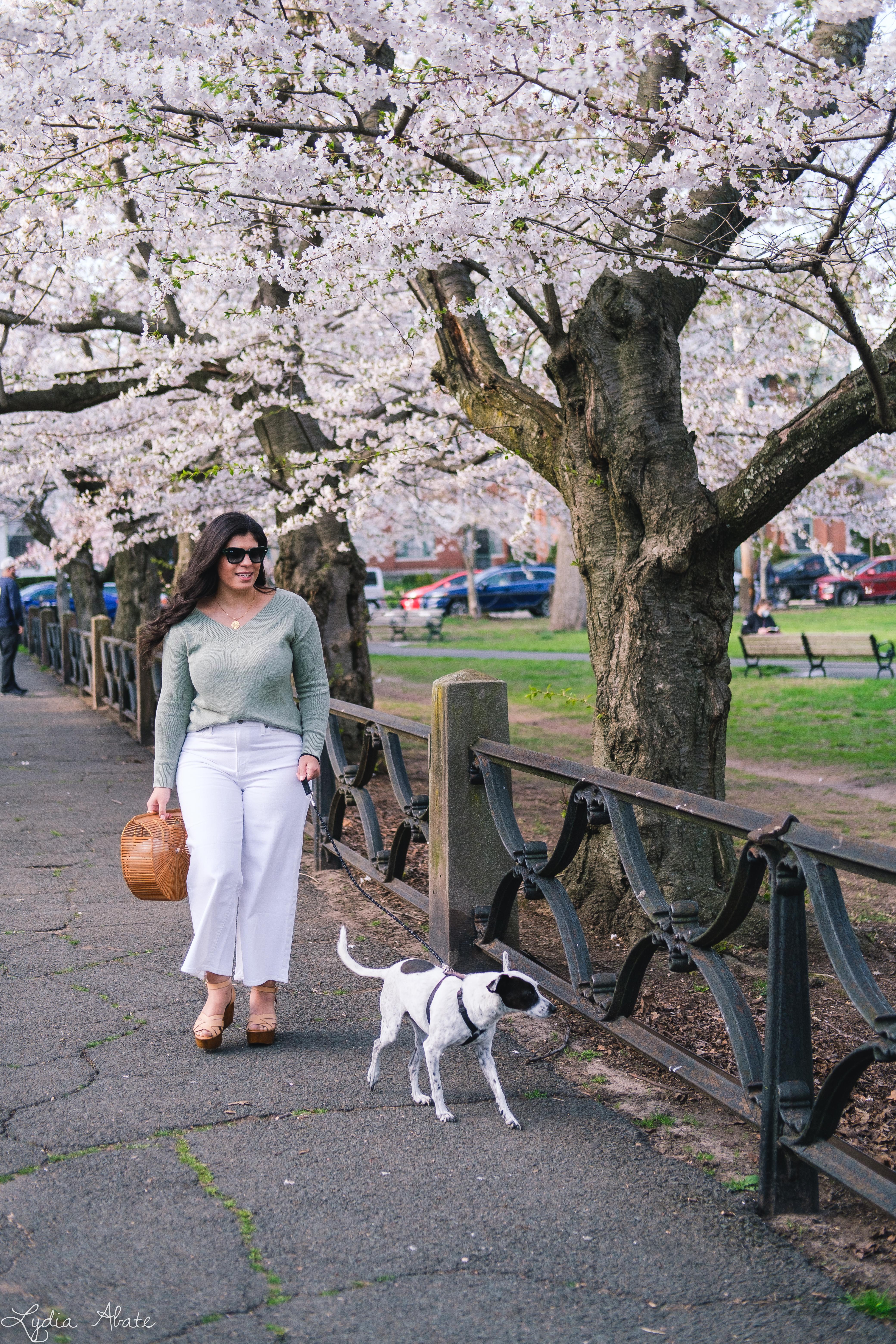 sage green sweater, white wide leg jeans, bamboo bag, dog walking-1.jpg