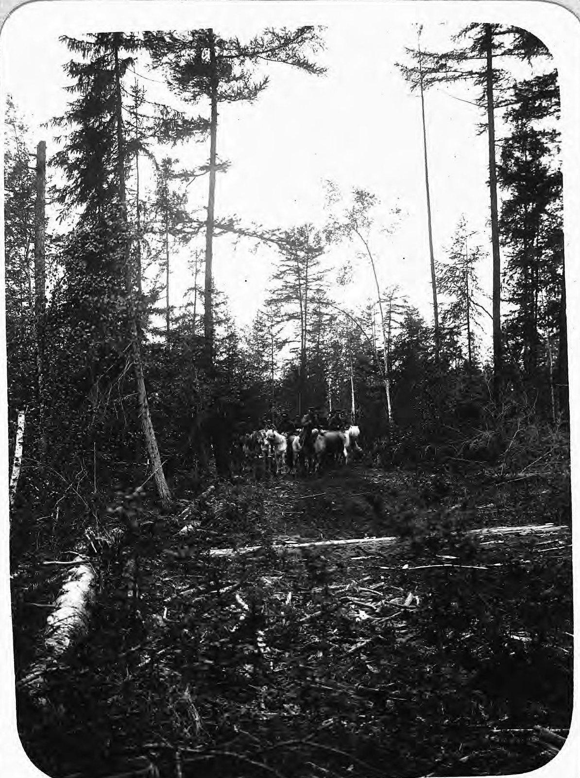 Всадники в лесу