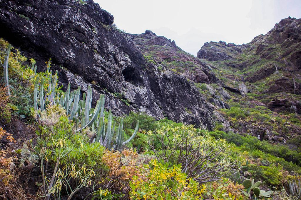 Vegetación en el barranco de Afur