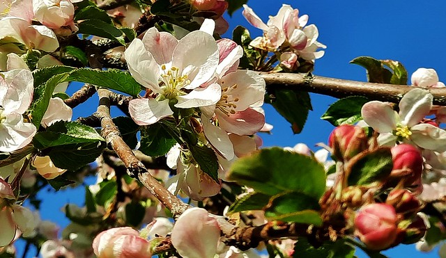 Frühling 😊 spring 😊 printemps 😊 primavera 😊 , 13631