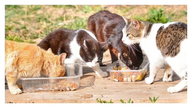 Si no te gustan los gatos...¿que haces aquí ?