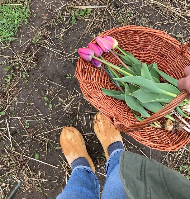 Field Trip in April:  Tip Top Tulips!