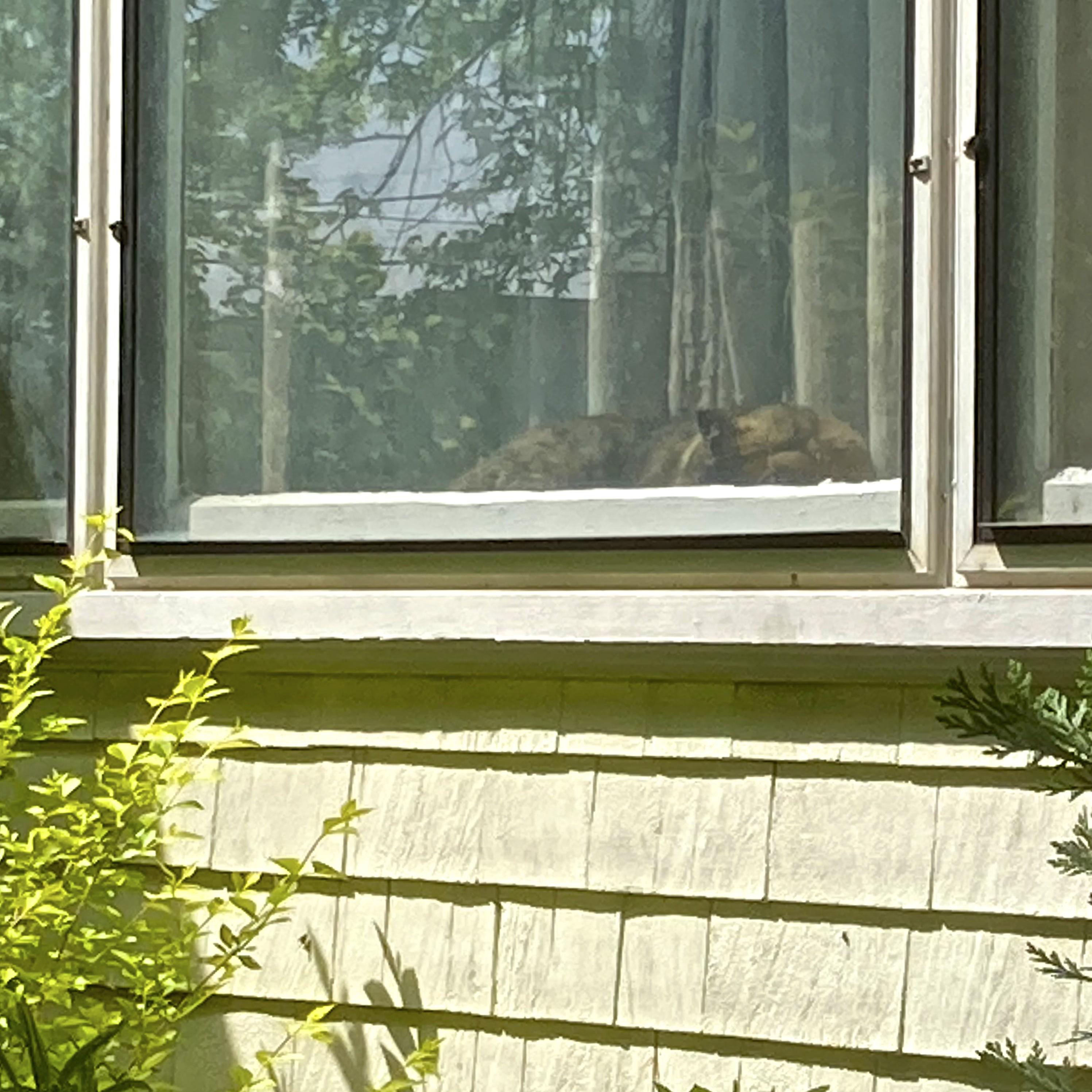 Window catnap