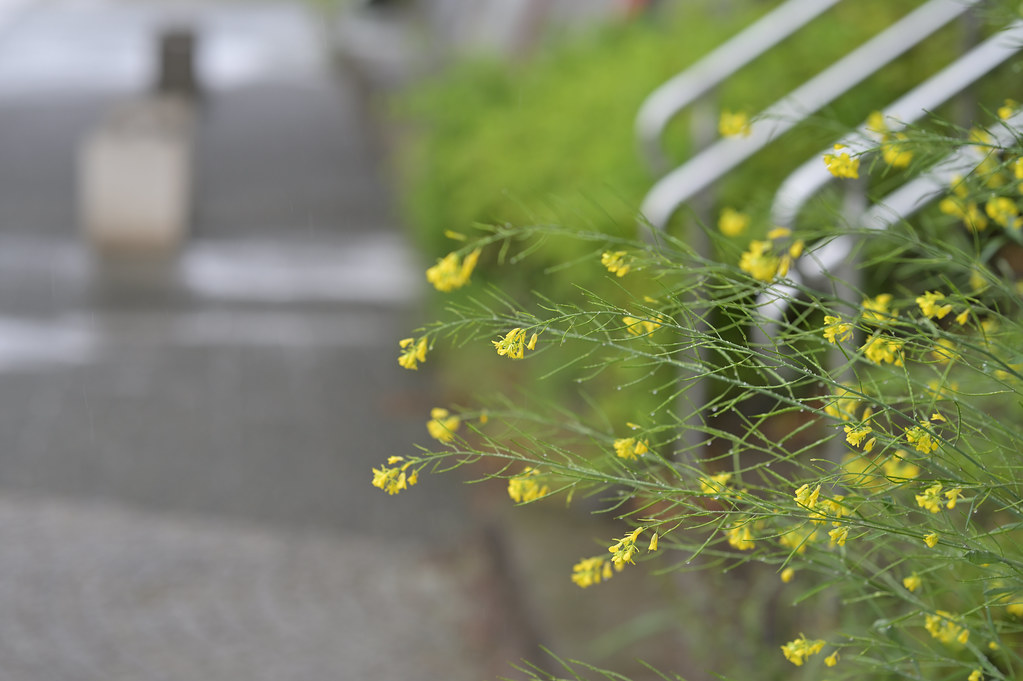 雨の鴨川 4