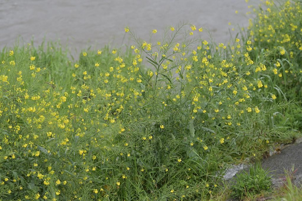 雨の鴨川 3